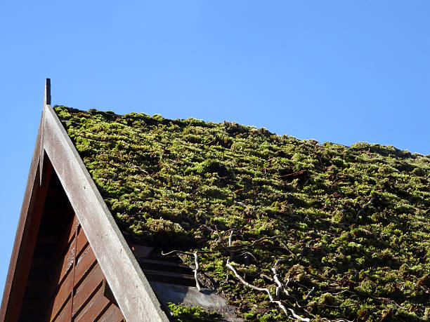 close up view of vegetated roof on small house
