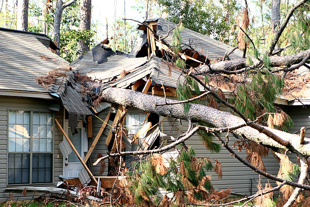 a tree has fallen over a roof during a hurricane storm